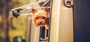 RV Rentals & Pets: How to Prepare for an Awesome Road Trip With Your Dog