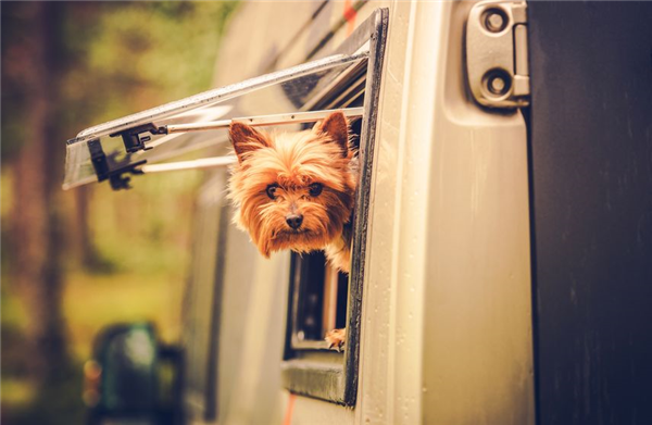 Vacation Travel Tips With Your Pet